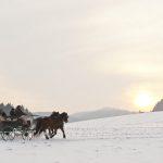 Kutschen-/Schlittenfahren - © OÖ Tourismus/Erber